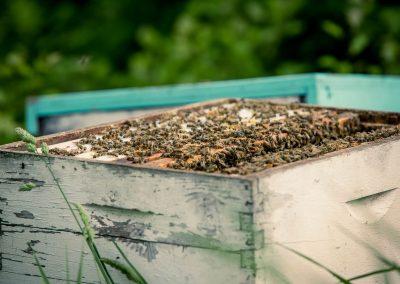 apiculture_img-04