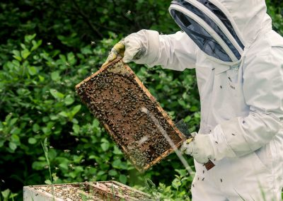 apiculture_img-06